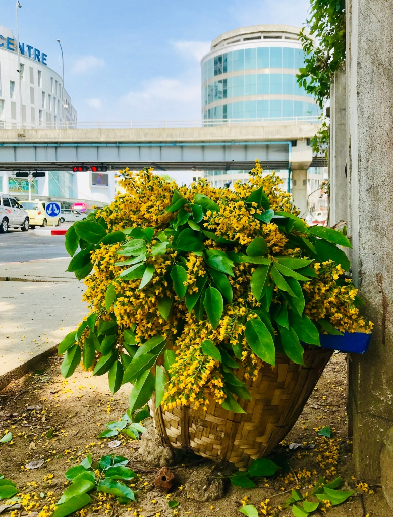 Bunga Padauk atau Thingyan Flower dijual di pinggir jalan prapatan Hledan