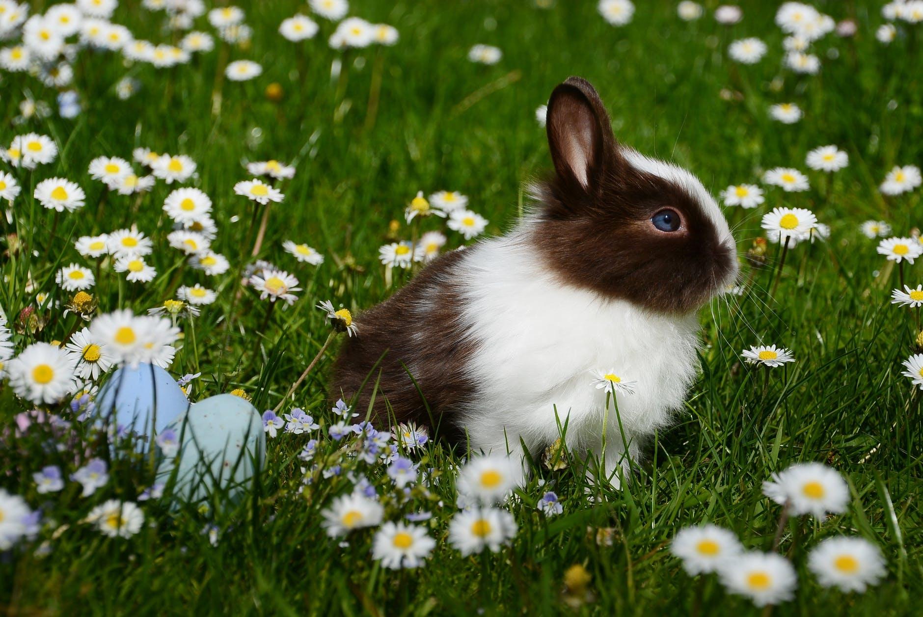 Kelinci Paskah sebagai lambang kesuburan.